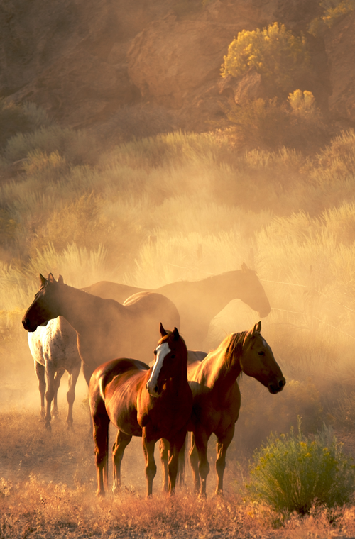 Tải Background miễn phí hình nền 8 con ngựa đẹp chất lượng cao shutertook